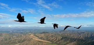 Resultado de imagen de fotografias gratis para blog de aves