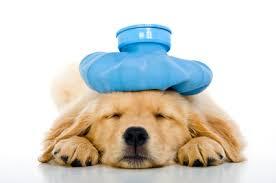 Ποια είναι τα συμπτώματα ενός ασθενούς σκύλου;