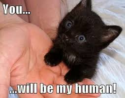 You will be my human! #cute #kitten #cat #meme #lolcat | KittyKats ... via Relatably.com