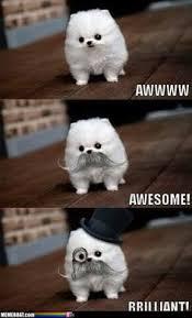 Funny memes! on Pinterest | Funny Cat Memes, Animal Memes and ... via Relatably.com