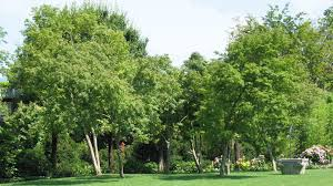 green giant lawn and tree care berks county wyomissing exeter tree care