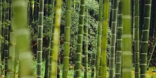 Is <b>Bamboo</b> Fabric <b>Eco</b>-<b>Friendly</b>? Is it a Miracle Product?