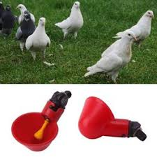 5PCS Poultry Water Drinking Cups Plastic Poultry Chicken ... - Vova