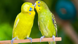 Image result for hd image of love