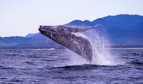 <b>Have a whale of</b> a time these school holidays | Wild About Whales ...