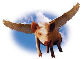 Image result for flying pigs