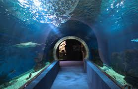 dr sid solomon office hallway aquarium aquarium office