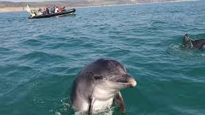Weymouth residents devastated by death of Danny the <b>dolphin</b> at ...