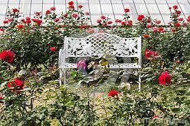 Resultado de imagen de fotos de rosaledas