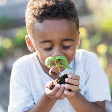 25 of the best Eco School activity ideas