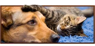 Paw <b>Prints Animal</b> Hospital: Vet Clinic in Easley & Powdersville, SC