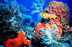 Images & Illustrations of coral reef