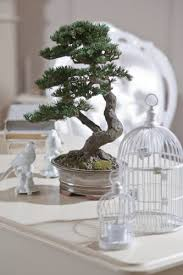 Amber <b>bonsai</b> Янтарный <b>бонсай</b> - <b>Home</b> | Facebook