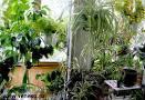 Дизайн горшечных растений