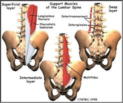 Image result for lumbar muscles