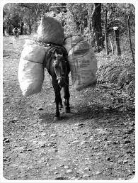 village life on ometepe island a photo essay carrier horse ometepe