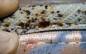Image result for serious about getting rid of the bed bugs