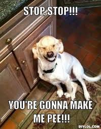 LAUGHING MEMES image memes at relatably.com via Relatably.com