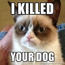 I KILLED YOUR DOG - Grumpy Cat | Meme Generator via Relatably.com
