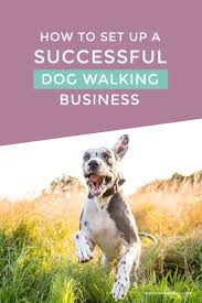 best ideas about dog walking business dog how to set up a successful dog walking business