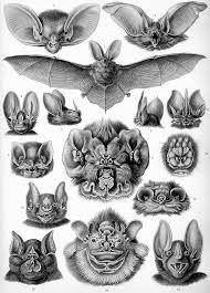 <b>Летучие мыши</b> — Википедия