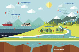 a simple guide to the steps of the water cycle the water cycle