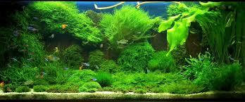 Image result for aquarium moss