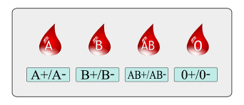 Image result for blood group