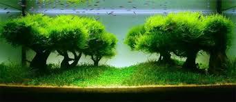 「水草」的圖片搜尋結果