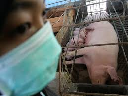 menangkal Flu Babi