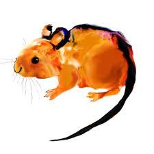 Mouse illustration <b>art</b> print, <b>endangered species animal</b> nature <b>decor</b> ...