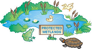 n c  association of soil and water conservation districts poster    wetland  buncombe county soil and water conservation