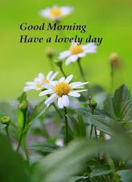 Good Morning SMS in Hindi Urdu Wallpaper Greetings | DailysmsPK.Net via Relatably.com