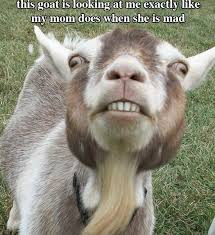 Смешни животни Images?q=tbn:ANd9GcSCXfywzCRzj4tr0PrRI4wDjIEzi683ktGxWxKViDHDEP0U855Q