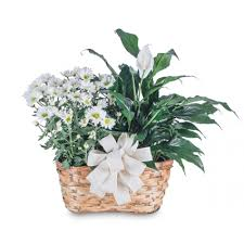 Blooming and <b>Green Plant</b> Combination Basket in Vinton, VA ...