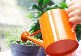 Натуральные <b>удобрения для комнатных растений</b>, ТОП 10