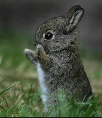 Image result for baby bunny