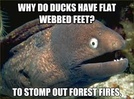 Why do ducks have flat webbed feet? To stomp out forest fires ... via Relatably.com