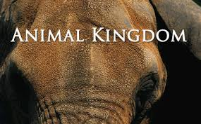Animal Kingdom 1.Sezon 8.B�l�m