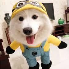 Купить Оптом Одежда Для <b>Собак</b> Funny Pet Outfit Supply ...