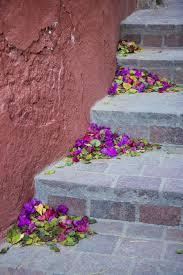 photo essay guanajuato planet bell flowers on street