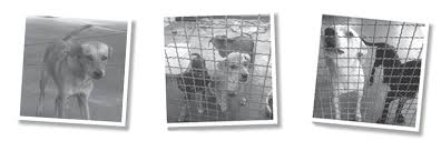 Shelter <b>dogs</b> around the <b>world are</b> ending up in laboratories ...