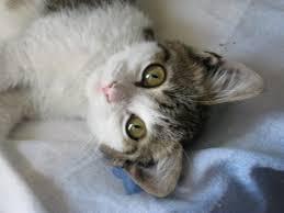 Risultati immagini per immagine gattina