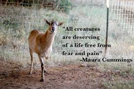 Image result for animal quotations