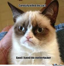 Angry Cat Memes. Best Collection of Funny Angry Cat Pictures via Relatably.com
