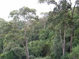 「森と木写真」の画像検索結果