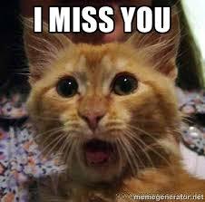 I miss you - Crazy cat | Meme Generator via Relatably.com