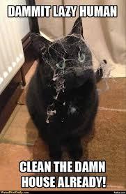 Cobweb Cat Says You're Lazy! Meme Generator - Captionator Caption ... via Relatably.com