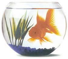"""Résultat de recherche d'images pour """"gif poisson rouge bocal"""""""