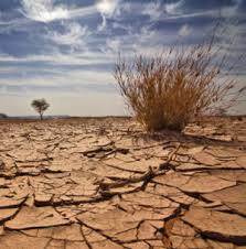 Image result for drought images